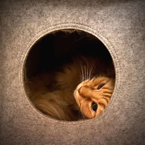 Close-up portrait of a cat hiding