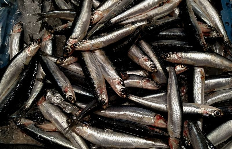 sardinas frescas recién pescadas Fish Fishing Fishing Boat Backgrounds Full Frame Close-up