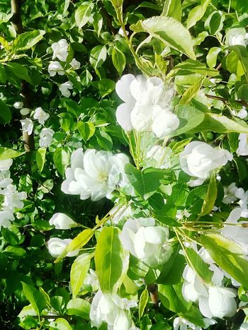 White Color Freshness Blooming Flower Head Outdoors Close-up No People Day Beauty In Nature