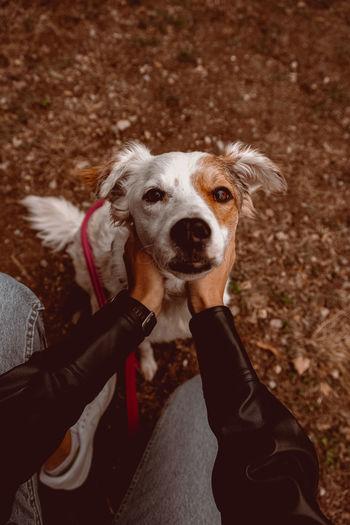 High angle portrait of dog on hand