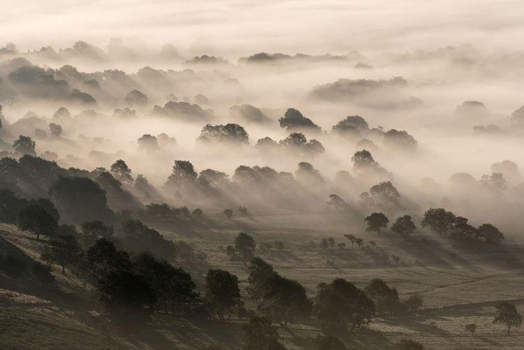 A very misty