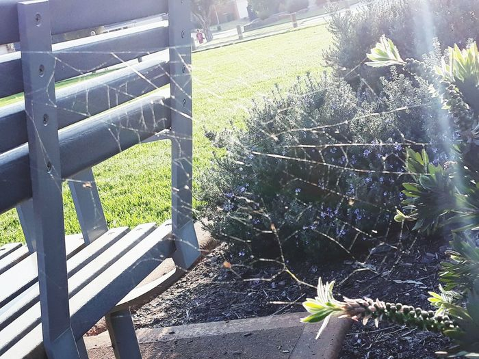 Tink'sWebRay Spider Web Spiders Web Eye4photography  EyeEm Gallery EyeEm Nature Lover Sunrays Sunrays! :) Sunray Of Light Sunrayscaptured Sunlight Close-up Grass Plant Life Leaves Growth Leaf Petal Stem