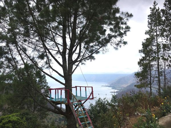Toba Lake Tree Water Plant Sky Nature Sea Day Transportation Growth Tranquility Beauty In Nature Scenics - Nature Mode Of Transportation Nautical Vessel No People Branch Outdoors Tranquil Scene Horizon Over Water EyeEmNewHere #urbanana: The Urban Playground