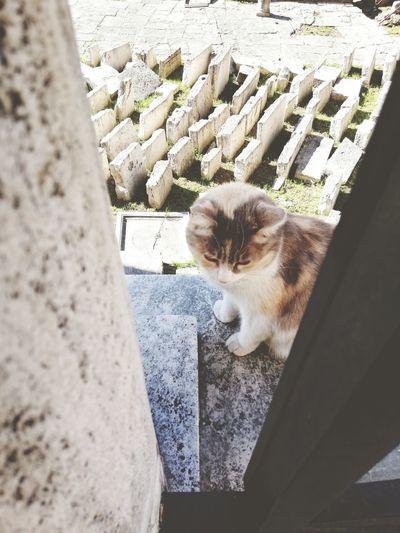 Il mio #gatto
