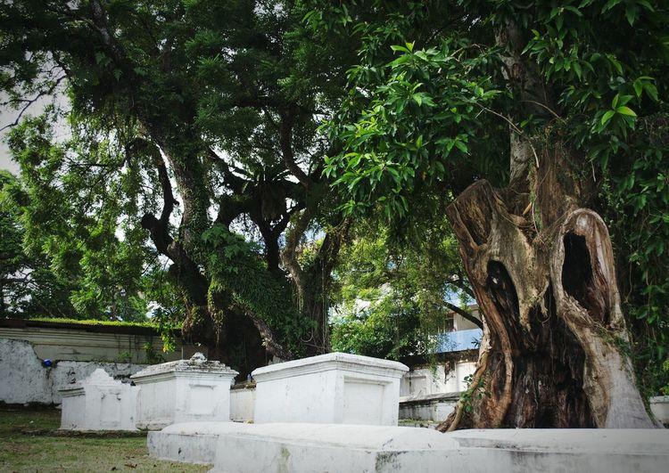 The Dutch Grave