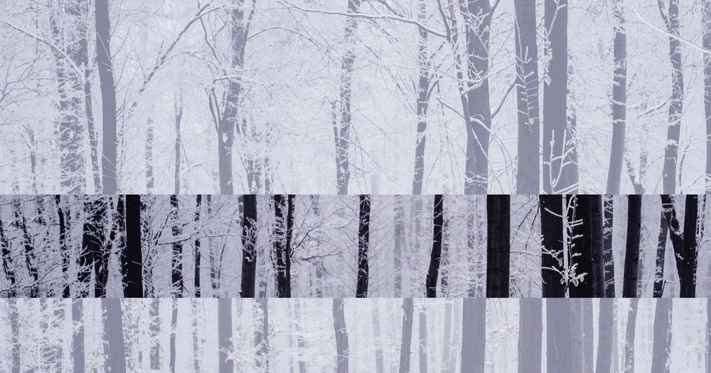 Aspect Winter Fineart Art Foggy Forest Photography EyeEm Selects No People Close-up Snow Cold Temperature Winter Day Barrier Frozen Boundary Pattern Ice Outdoors Nature Backgrounds White Color Snowing Icicle My Best Photo