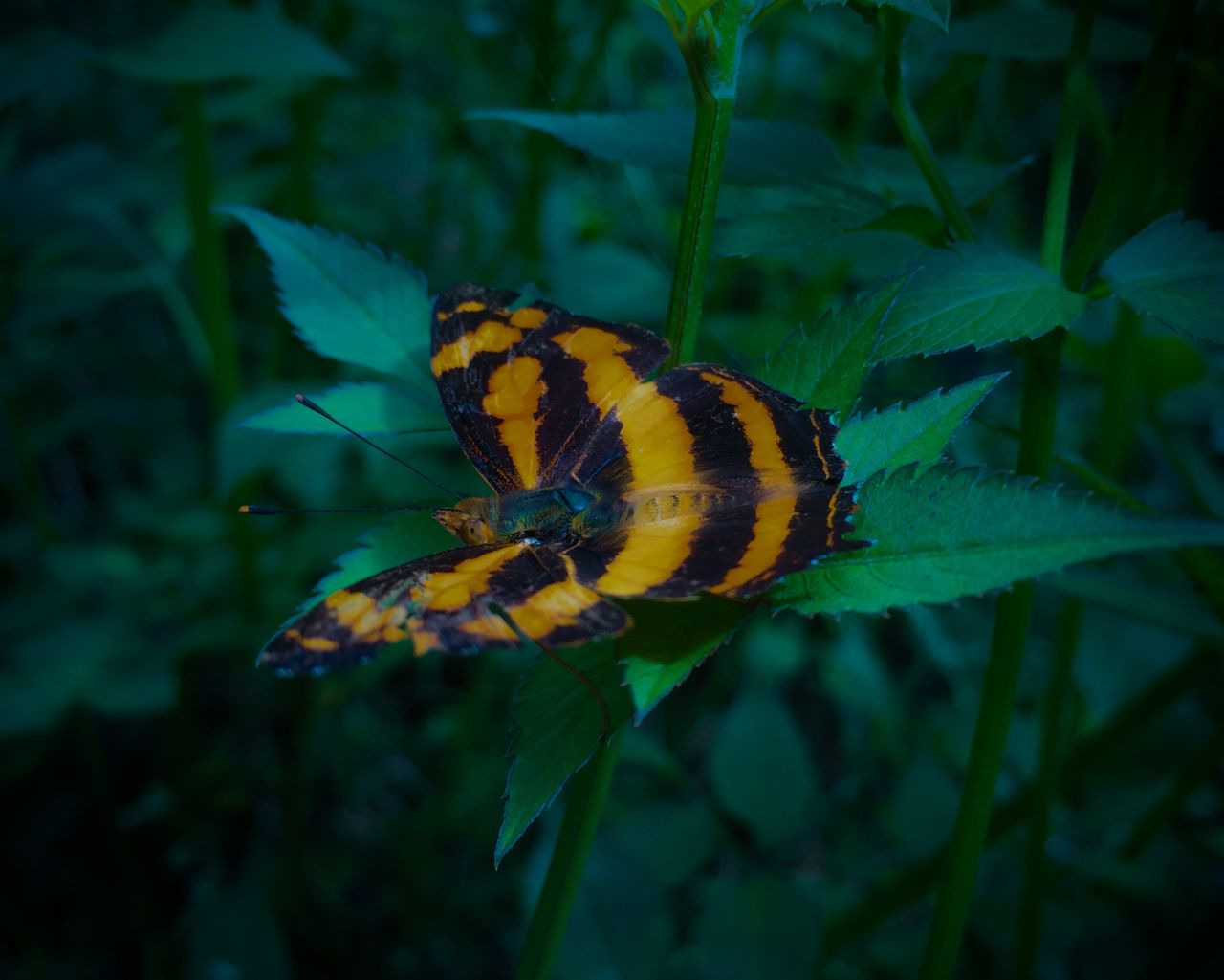 animal wildlife, beauty in nature, animals in the wild, animal themes, animal, invertebrate, plant, one animal, insect, plant part, leaf, close-up, growth, nature, yellow, flower, no people, fragility, vulnerability, flowering plant, animal wing, butterfly - insect, flower head, outdoors, butterfly, pollination