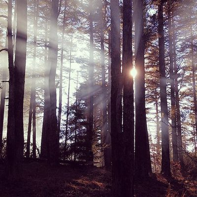 Forest Trees Sun Fall mountain Light Sunray Amazing
