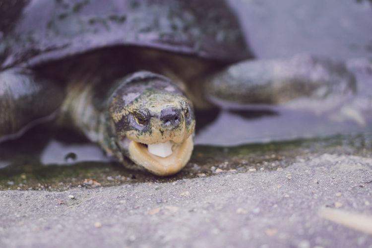 Close-up portrait of a turtle