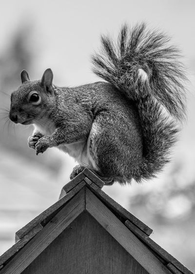 Close-Up Of Squirrel On Birdhouse