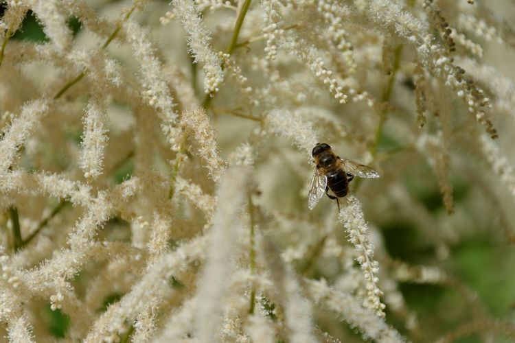High Angle View Of Bee On Plant