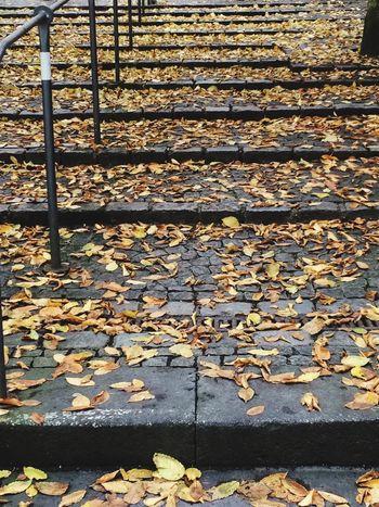 Autumn Autumn Colors Leaf Outdoors Change Day Melancholic Staircase Black Railing Plaster