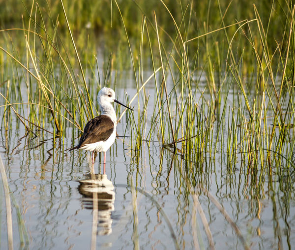 Bird perching on grass by lake