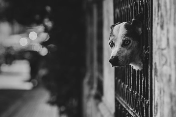 Dog peeping through railing