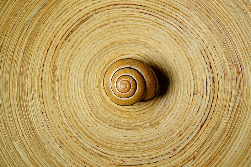Directly above shot of snail on spiral wooden table