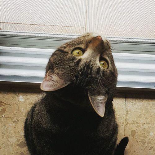 Rincon, the cat