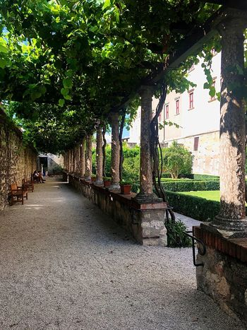 Buonconsiglio Tree Plant Day Nature Architecture Growth Built Structure EyeEmNewHere