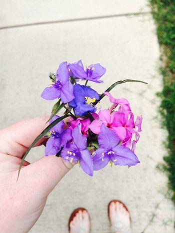 Violet By Motorola Violet Flowers Violet Flower Violet Wildflowers Purple Indigo