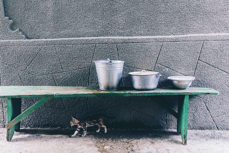 Countryside Countryside Life Cat House Exterior Minimalist Walking Cat Summertime Summerfeeling Moldova