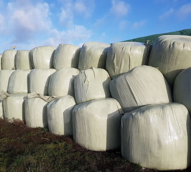 Agriculture Agricultural Field Agricultural Machinery Agricultural Land Agriculture Photography Agricultural Farming Region Farming Life Straw Bales Industry Hay Bale Agriculture Stack Sky Cloud - Sky Bale  Straw Stalk Harvesting Picking Farm Hay Haystack Farmland Combine Harvester Rolled Up Farm Worker