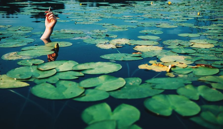 Cropped hand of woman holding cigarette surrounded by lily pads in pond