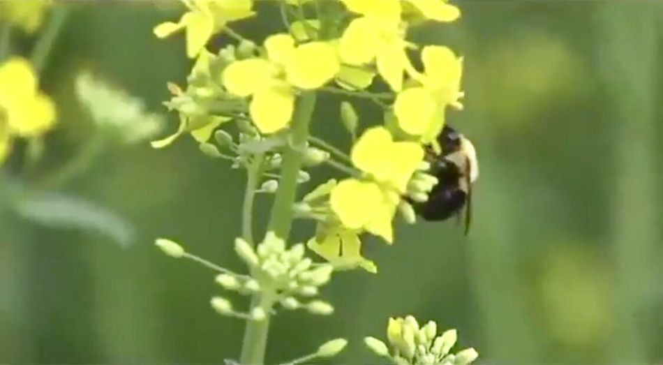 Bee Growth Nature Plant Insect Flower No People Fragility L Love family's cClose-upAAnimals In The WildoOne AnimaloOutdoorsdDayyYellowaAnimal ThemesFFreshness