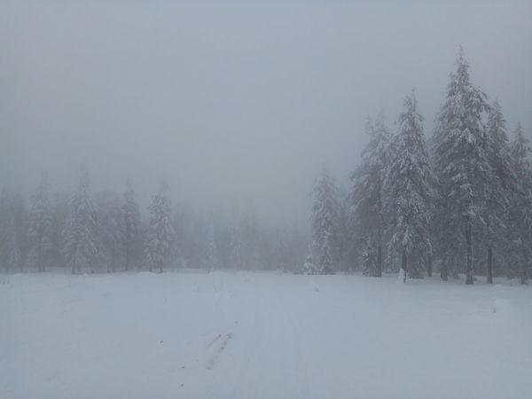 Winter Cold Temperature Nature прогулка ШадТчупЛинг буддиский монастырь Snow Minimalism Beauty In Nature