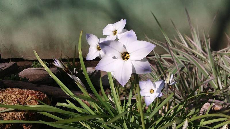 spring shining Spring Sunshining Flowers
