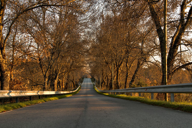 Open road Open Road Portugal Road Sunset Travel Trees