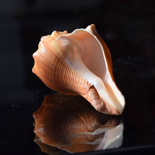 Close-up of seashell on glass table