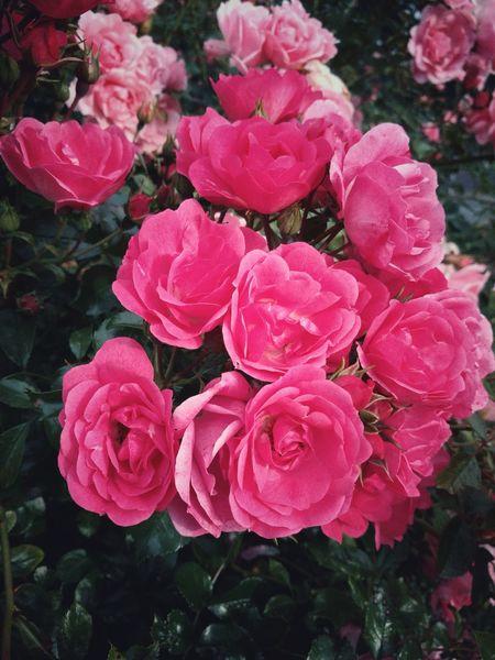 Fleurs du Nord... Nature Paysage De France Fleurs Nord