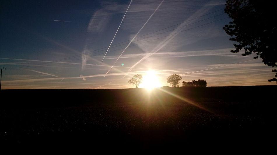 Astronomy Tree Star - Space Sunset Silhouette Sky
