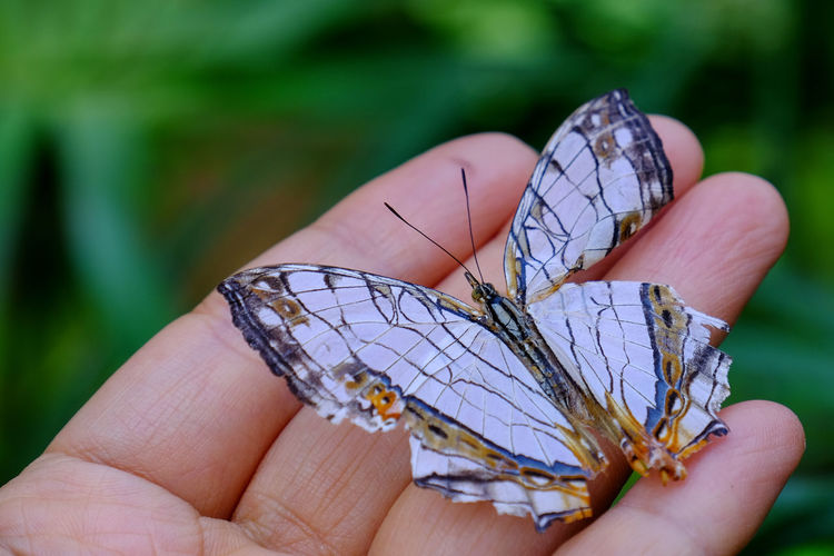 Close-Up Of Butterfly On Person Hand