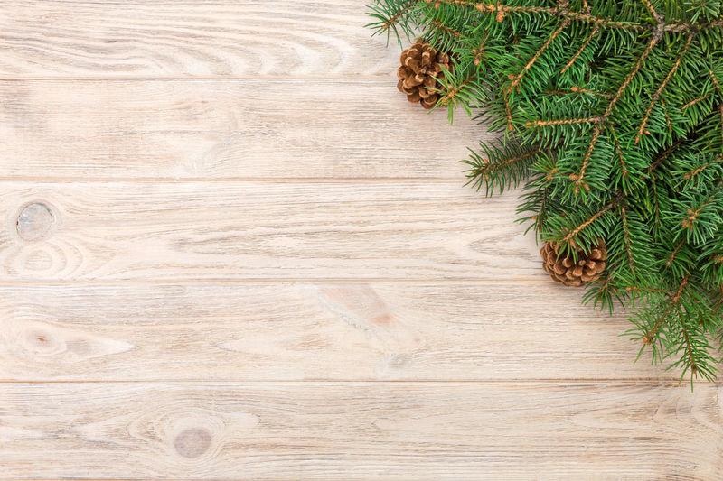 High angle view of pine tree on floor