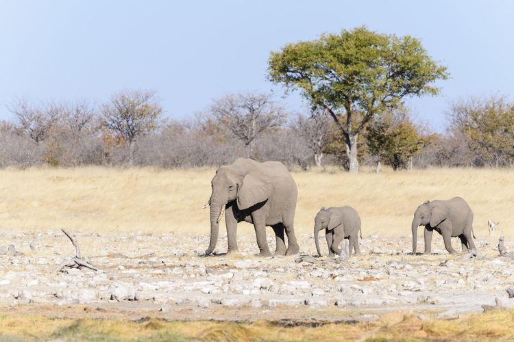 Elephant on landscape against sky