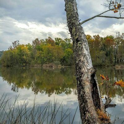 Trees And Sky Trees Lake Lakes  Lakeside Lake View Water Reflection Fall Colors Fall Beauty Nature Fall Season Colors Lakeview Caryville Tn