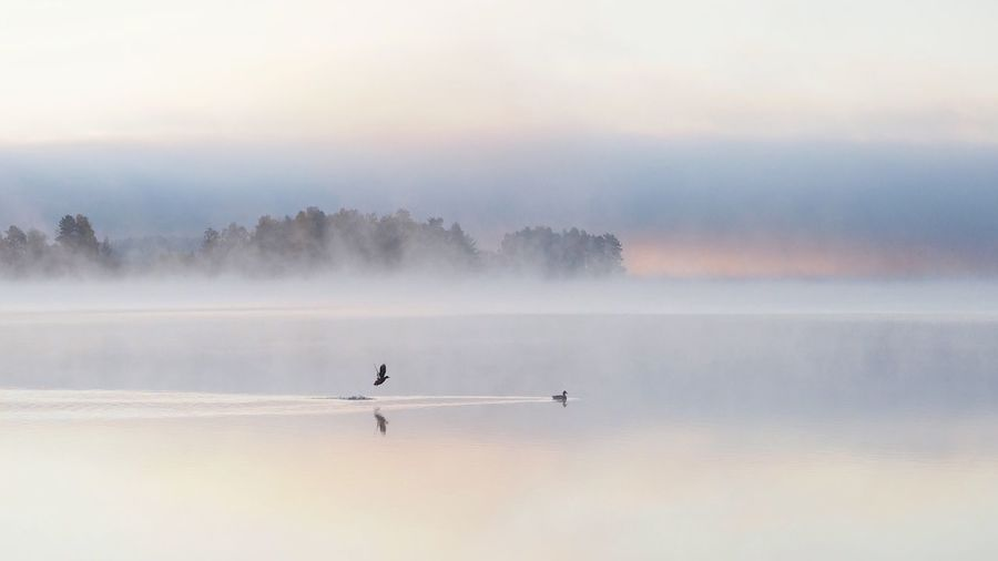 Scenic view of birds in lake during misty morning