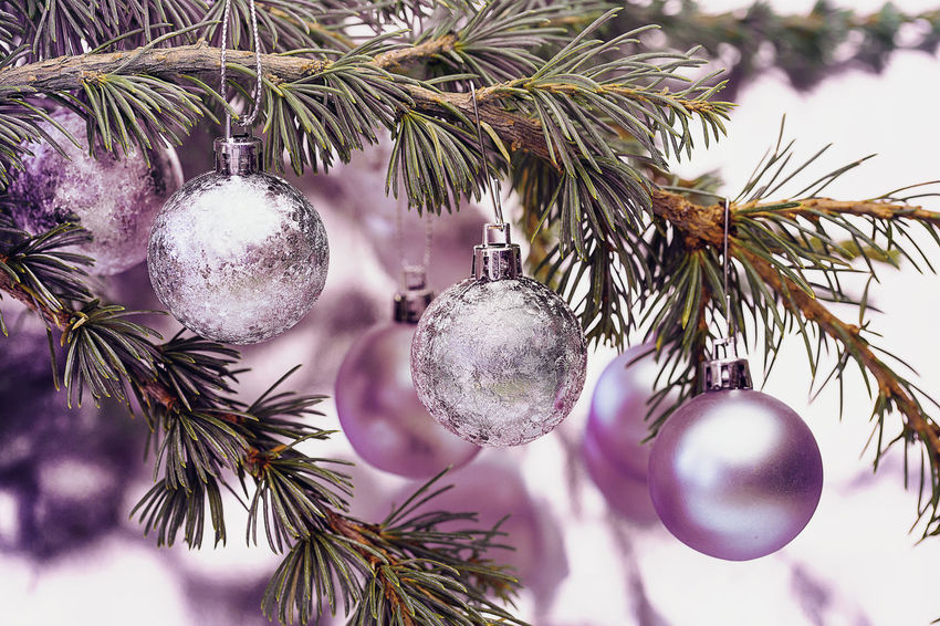 Soft pink Christmas ball ornaments hanging on fir tree Elegant Feminine  Fir Tree Pink Shiny Bauble Celebration Christmas Christmas Decoration Christmas Ornament Christmas Tree Close-up Decoration Festive Focus On Foreground Glamour Hanging No People Rose Gold Shimmering Tree
