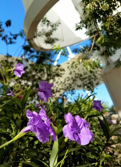 Autumn flowers under the construct of Skysong. Flower Plant Nature Growth Day No People Outdoors Tree Beauty In Nature Close-up Freshness Fragility Sky Flower Head Architecture Building Exterior Arts Culture And Entertainment
