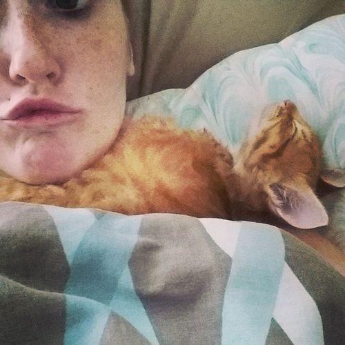 Lil Ollie. Gingerkitty Ollie Catmom