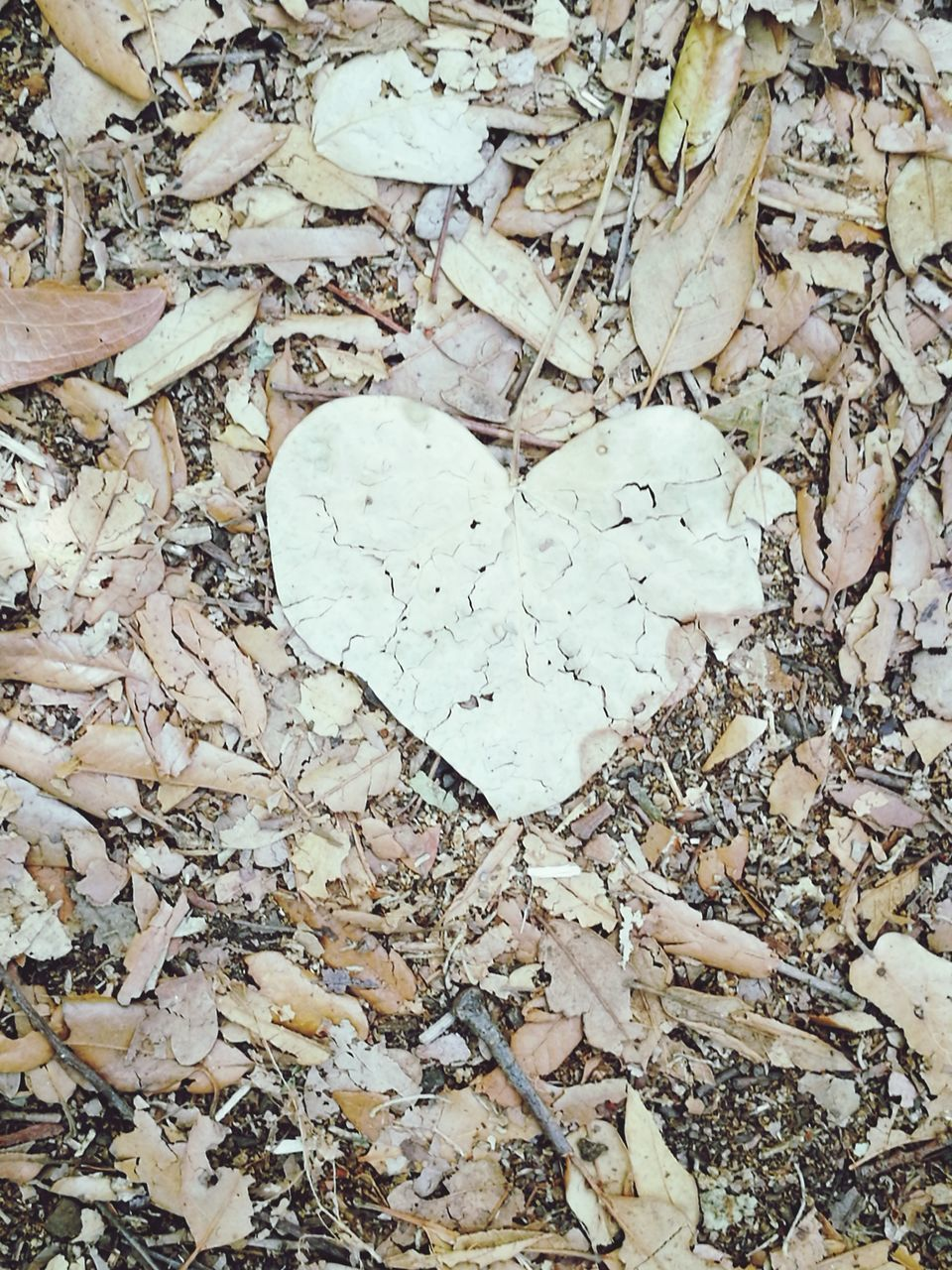 heart shape, love, leaf, full frame, day, no people, high angle view, outdoors, autumn, directly above, backgrounds, close-up, nature, fragility