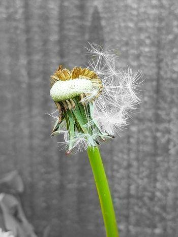Spring is here Art Summer Spring Springtime Spring Has Arrived Spring Flowers
