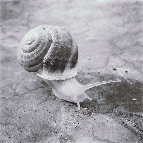 Snail B&w Animal Weird France Weirdsnail