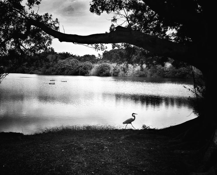 Sunday! Relaxing Blackandwhite Monochrome Monoart NEM Black&white Mobliephotography