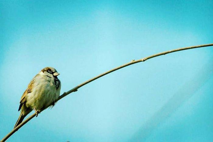 ......Alone time. . . . . . . Animal Animalshots_ Photography Photooftheday Bird Bird Photography Sky Blue Picture Beautiful Wniter2015 Nice All_shots Alonetime Alone ایران_زیبا پرنده پرواز زمستان  آسمان  عکس عکاسی طبیعت زیبایی تنهایی