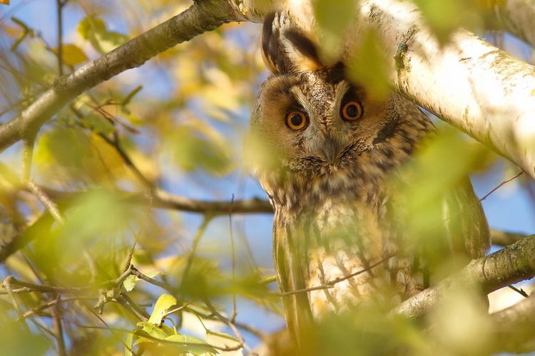 Close-up of owl perching on tree branch
