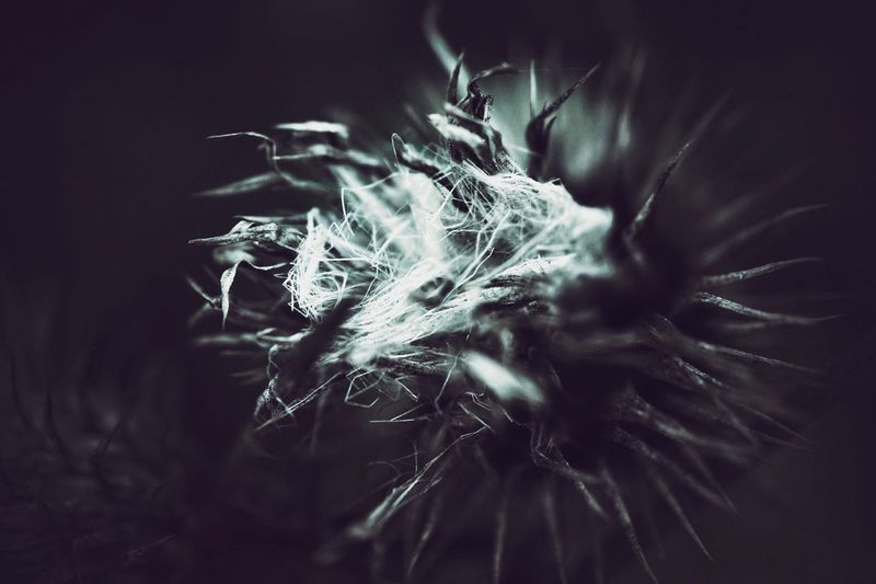 Close-up Fragility Nature No People Outdoors Night Beauty In Nature Black Background Freshness Flower Plant Abstract Minimalism Close Up Bokeh Smell Tranquil Scene Love Light And Shadow Beauty In Nature Beautiful Nature