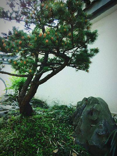 Green Plant Green Nature Taking Photos滁州琅琊山