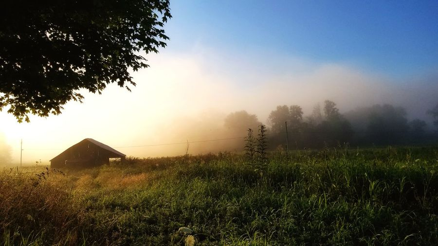 morning mist on