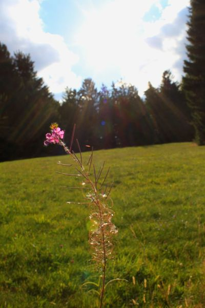 Taken during a hike in the Black Forest outside of Freiburg, Germany. Wildflower Meadow Beauty In Nature Landscape Germany Black Forest Germany Hike Nature Travel Traveling Texan Traveling Abroad Europe Trip Canont1i Vacation EyeEm Best Shots Solitude Lensflare Blueskies